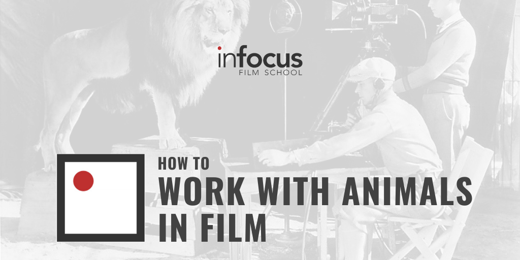 How to Work with Animals in Film