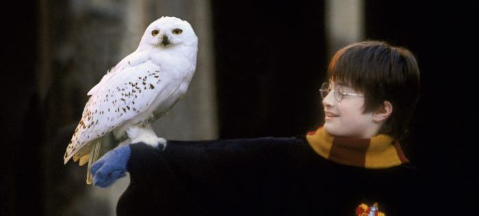 Animals in Film Hedwig Harry Potter