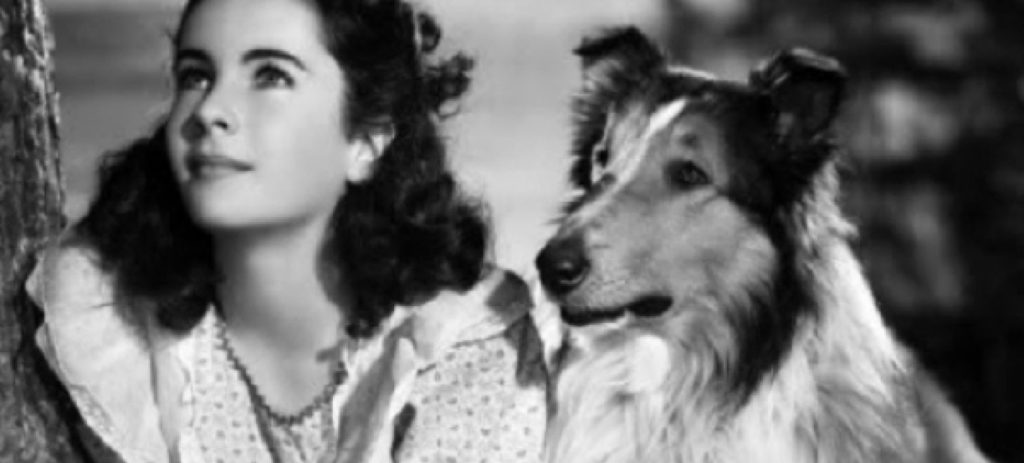 Animals in Film Lassie